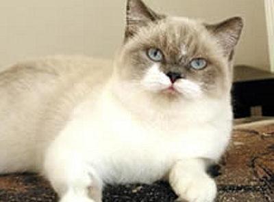 http://catstyle2005.narod.ru/agnes-agnes-25.jpg