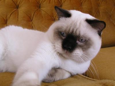 http://catstyle2005.narod.ru/honey-honey-022.jpg